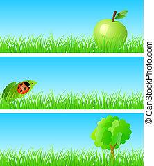 Apple, ladybird on a leaf, tree