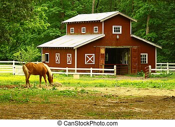 Farm - An old horse barn with a horse eating straw in the...