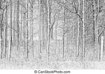 Snow Covered Trees and with Fence - A winter scene of snow...