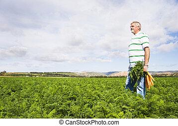 cenoura, agricultor, cenoura, campo, fazenda