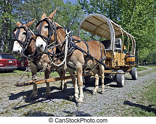 Mules Hitched to a Wagon - Two mules hitched to a covered...