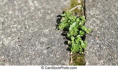 Ants and a plant in between tiles