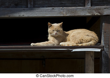 Orange Cat Napping - An orange cat taking a cat nap on a...