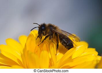 Bee, Burgos, Castilla y Leon, Spain