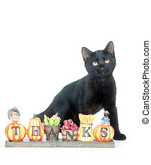 Cat with sign - Black cat sitting next to Thank You sign