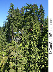 Capilano Suspension Bridge, Vancouver, Canada - Capilano...