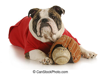 pet exercise - bulldoy laying down with baseball and glove...