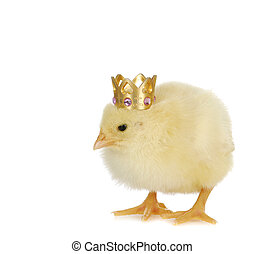 newborn chick wearing crown - famous chick