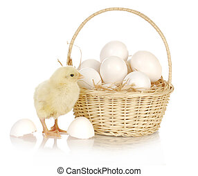 basket of eggs with baby chich