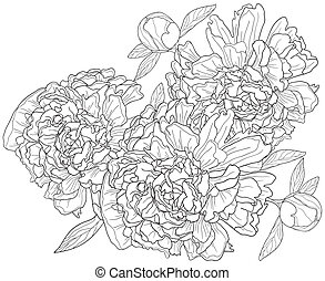 peonies - Vector illustration of monochrome background with...