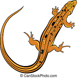Realistic gecko lizard. Illustration on white background for...