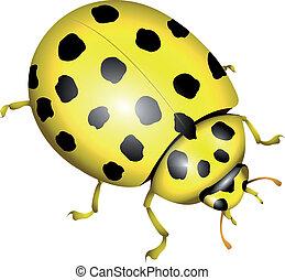 Ladybug - yellow ladybug