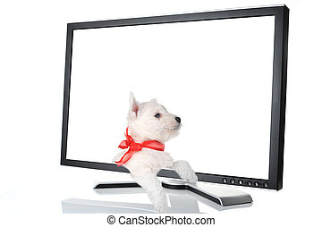 black monitor white - cute puppy in black monitor on white...