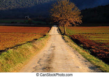 Country path - A beautiful landscape in Tuscany