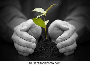 pequeno, planta, protegido, mãos