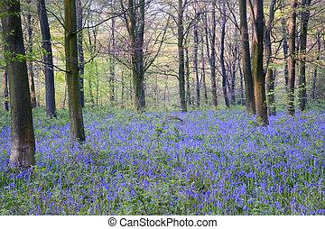 gyönyörű, friss, erdő, eredet, harangvirág