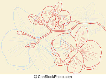 orchid flowers - Vector illustration of beautiful orchid...