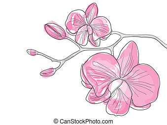 orchid flowers - Vector illustration of pink orchid flowers