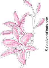 pink lilly - Vector illustration of beautiful pink lilly
