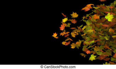 autumn leaf transition