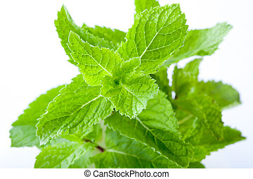 Fresh mint leaves - Bright green fresh mint leaves, close...