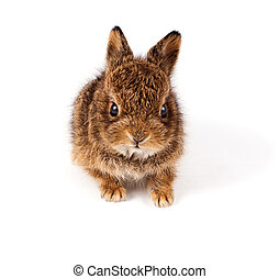Wild rabbit - Wild little rabbit isolated on white