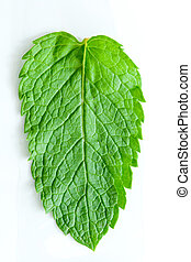 Fresh mint leaves - One fresh mint leaves, close up, on a...