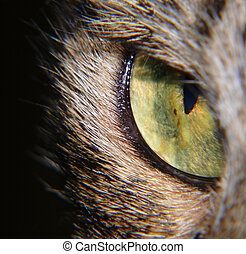 Cats Eye - Extreme close-up of cats eye in the dark