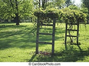 Grape arbor in the backyard in Kentucky in springtime