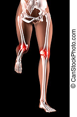Female skeleton legs running