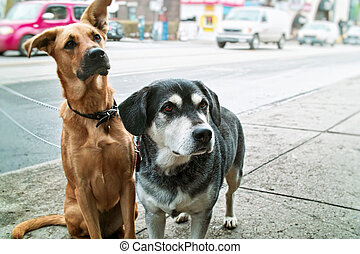 Two dogs on sidewalk - Two pet dogs waiting on sidewalk on...