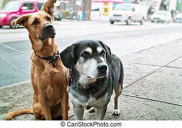dos, Perros, acera