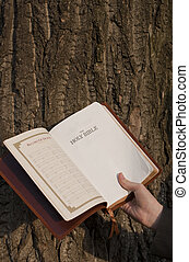 Hand holding the opened Bible