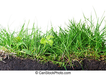 young grass turf close up