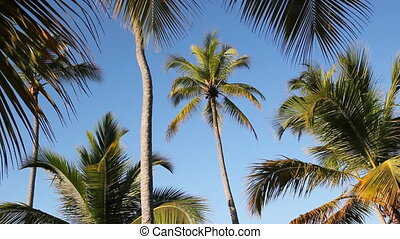Palm trees. - Palm tree framed by branches and fronds of...