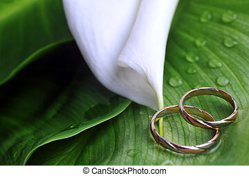calla lily and wedding rings - white calla lily and wedding...