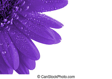 fantasy purple flower