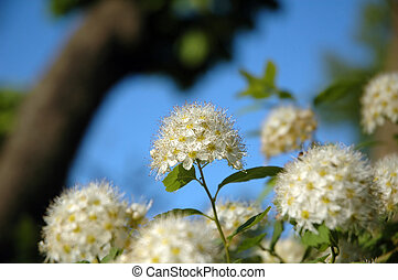 white flower on sky background