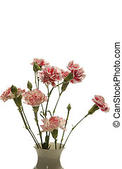 tribute of carnations isolated on white