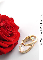 red rose with rings isolated on white