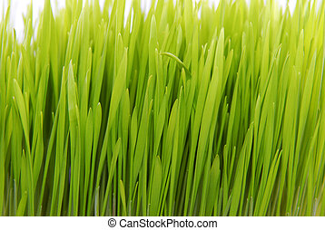 fresh grass isolated close up