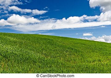 Green field with blue sky and clouds in the background