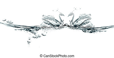 Wasser, Paar, Schwäne