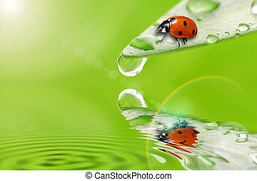 bright green leaf with ladybug and water drop  close up