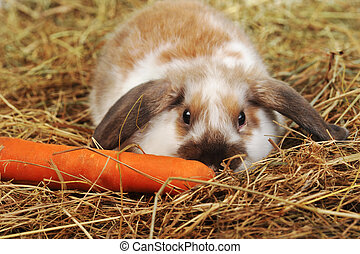 rabbit on hay - fluffy rabbit lies on soft hay