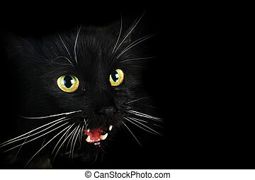 black cat - Close up portrait of angry black cat