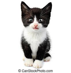 small cute kitten - beautiful small kitten isolated on white...