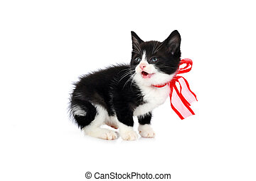 small cute kitten - beautiful small kitten isolated on white...