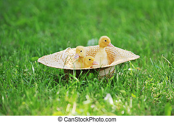 Small ducklings green grass - Small ducklings outdoor on...