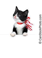 cute kitten on white - small cute kitten isolated on white